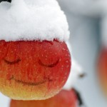 d. snowy apple