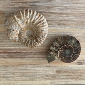 Fossils and fossil stones